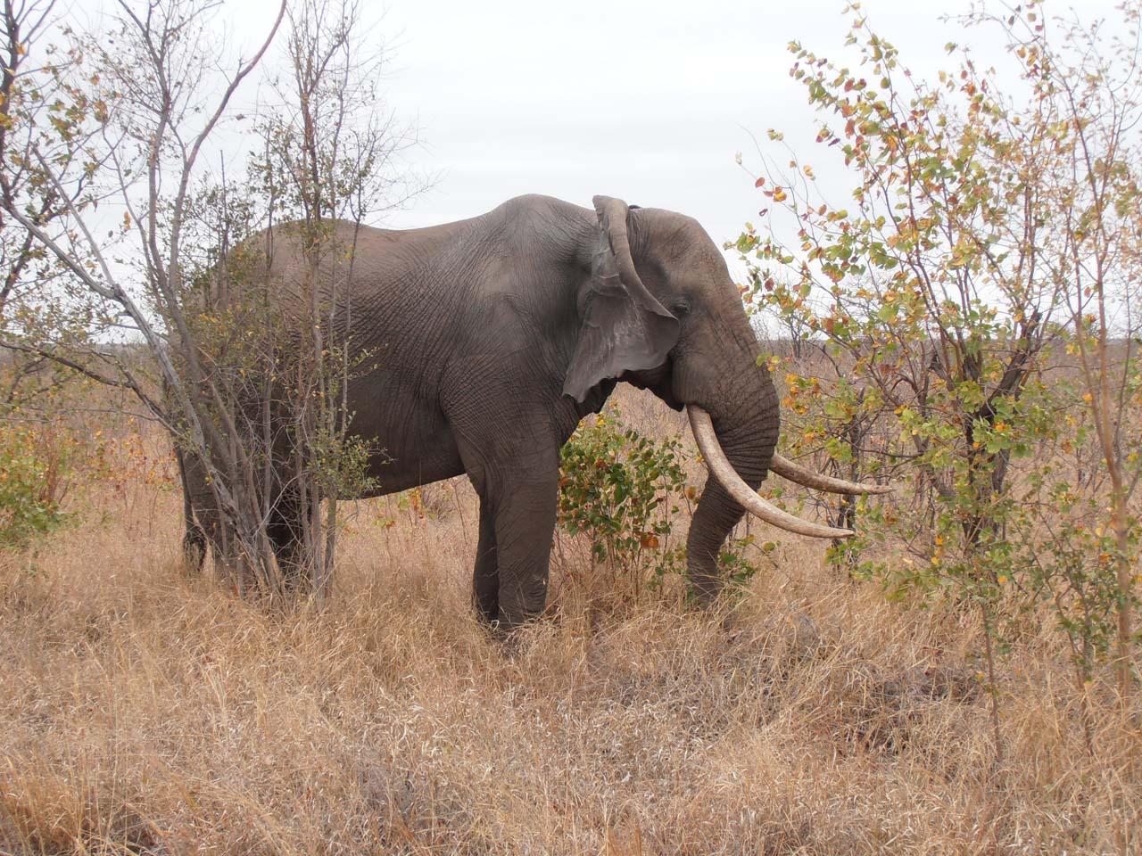 safaritur